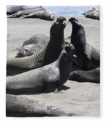 Beachmasters - Elephant Seals Fleece Blanket