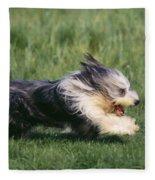 Bearded Collie Dog Fleece Blanket