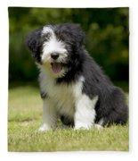 Bearded Collie Puppy Fleece Blanket