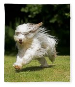 Bearded Collie Running Fleece Blanket