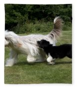 Bearded Collies Playing Fleece Blanket