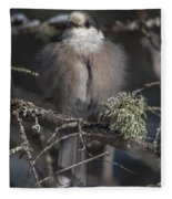 Beautiful Grey Jay Pose Fleece Blanket