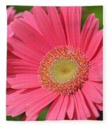 Beautiful Pink Gerber Daisies Fleece Blanket