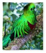 Beautiful Quetzal 2 Fleece Blanket
