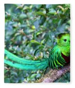 Beautiful Quetzal 3 Fleece Blanket