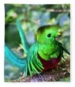 Beautiful Quetzal 5 Fleece Blanket