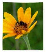 Bee On A Smooth Oxeye Fleece Blanket