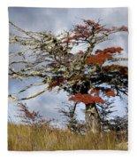 Beech Tree, Chile Fleece Blanket