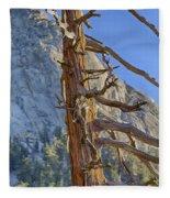 Beetle Barren Pine Fleece Blanket