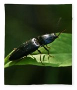 Beetle Elateridae Fleece Blanket