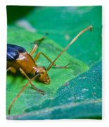Beetle Sneeking Around Fleece Blanket