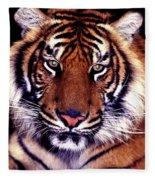 Bengal Tiger Eye To Eye Fleece Blanket