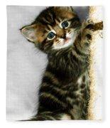 Benny The Kitten Playing Fleece Blanket