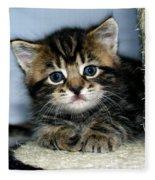 Benny The Kitten Resting Fleece Blanket