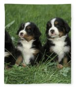Bernese Mountain Puppies Fleece Blanket