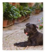 Big Black Schnauzer Dog In Italy Fleece Blanket