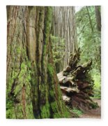 Big California Redwood Tree Forest Art Prints Fleece Blanket