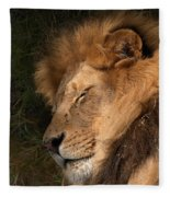 Big Cat Nap Fleece Blanket