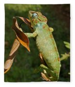 big chameleon of Madagascar 20 Fleece Blanket