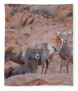 Big Horn Group Pose Fleece Blanket