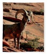 Big Horn Ram At Zion Fleece Blanket