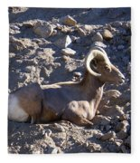 Big Horn Sheep Close Up Fleece Blanket