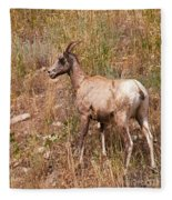 Big Horn Sheep Ewe Fleece Blanket