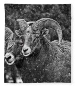 Bighorn Brothers In Grey Colorized Fleece Blanket
