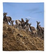 Bighorn Sheep At Blue Mesa Reservoir Fleece Blanket