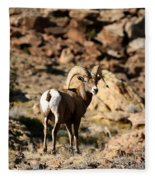 Bighorn Stare Fleece Blanket