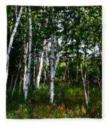 Birch Grove In The Sunlight Fleece Blanket
