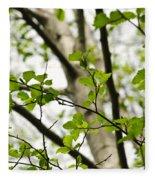 Birch Tree In Spring Fleece Blanket