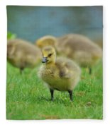 Bird - Baby Goose -leader Of The Pack Fleece Blanket