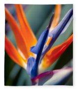 Bird Of Paradise - Strelitzia Reginae  Fleece Blanket
