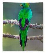 Bird Perching On A Branch, Savegre Fleece Blanket