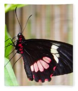 Black And Red Cattleheart Butterfly Fleece Blanket