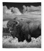 Black And White Photograph Of An American Buffalo Fleece Blanket