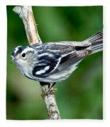 Black-and-white Warbler Mniotilta Varia Fleece Blanket