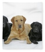 Black And Yellow Labradors With Puppy Fleece Blanket
