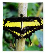 Black And Yellow Swallowtail Butterfly Fleece Blanket