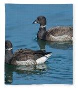 Black Brant Pair Swimming Fleece Blanket
