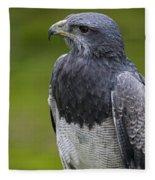 Black-chested Buzzard-eagle Fleece Blanket
