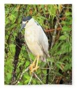 Black Crowned Night Heron Fleece Blanket