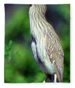 Black-crowned Night Heron Juvenile Fleece Blanket
