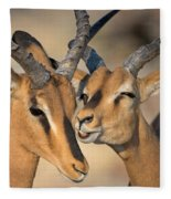 Black-faced Impalas Aepyceros Melampus Fleece Blanket