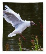 Black Head Gull - Preparing For Landing Fleece Blanket