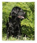 Black Labrador Dog Fleece Blanket