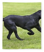 Black Labrador Playing Fleece Blanket