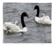 Black Necked Swans Patagonia 1 Fleece Blanket