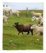 Black Sheep Fleece Blanket